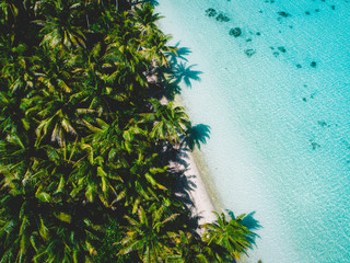 Aerial view of island beach with palm trees, Tahiti, South Pacific