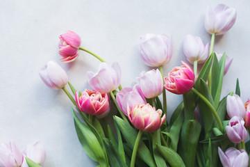 Pink tulip. Tulips. Flower background. Flowers photo concept. Holidays photo concept. Pink tulips on gray abstract background. Pink tulip. Tulips. Flowers. Flower background. Copyspace. Peony Tulip