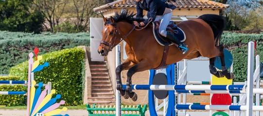 Papiers peints Equitation Equitation, saut d'obstacle, compétition.