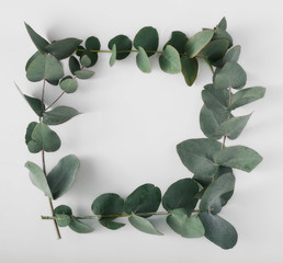 Frame of eucalyptus branches on a white background