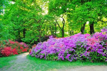 Beautiful flowers in Isabella garden in Richmond park, London