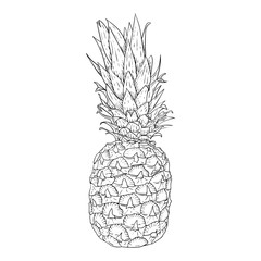Pineapple. Hand drawn sketch