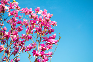 Beautiful spring flower blossoming tree on background sky.