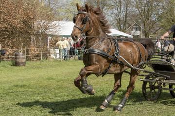 Poster Horses Bruin paard erg actief.