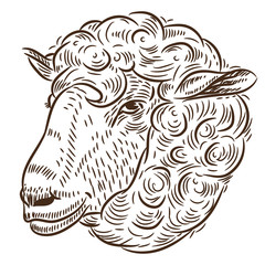 Portrait of a sheep. Sketch by hand, vector