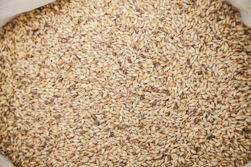 Malt grains background. Ingredient for beer production