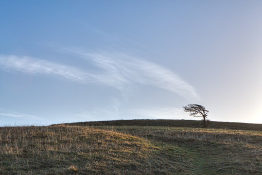 Solitary tree on a hillside, bent by the wind, with cloud patterns in the blue sky behind appearing to blow from the tree