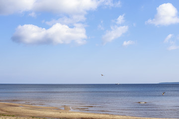 Seaview, a small ripple, the ship on the horizon, blue sky with white clouds and seagulls.