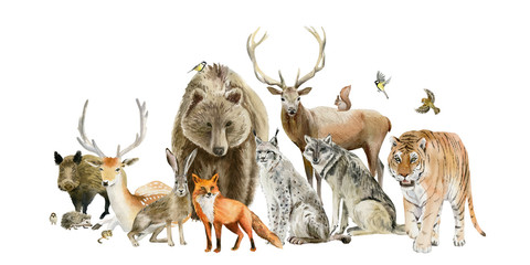 Poster of watercolor hand drawn animal cliparts