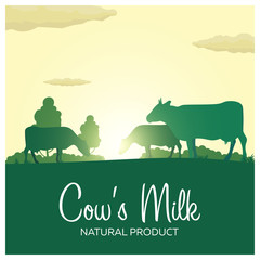 Cow's Milk natural product. Rural landscape with mill and cows. Dawn in the village.