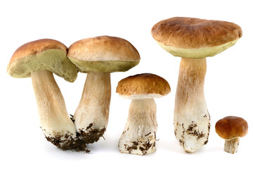 fresh penny bun  mushrooms on white isolated background