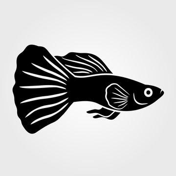 Guppy Fish icon isolated on white background.