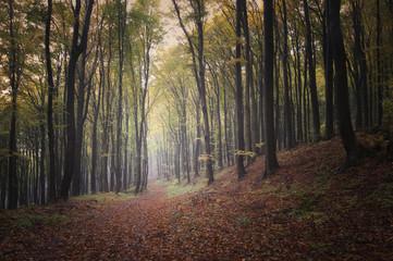 autumn forest landscape background