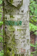 Baumrinde mit Inschrift