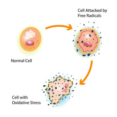 Cell Oxidative Stress