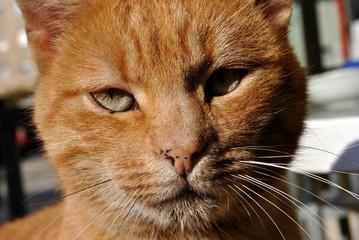 Stray cat portrait; macro.