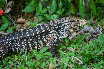 animal reptile about vegetation green