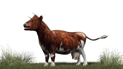 Cow - brown white cow on green grass - isolated on white background