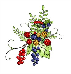 Vector Bouquet of berries isolated on white background