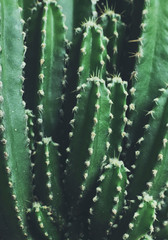 Close up of cactus in the garden
