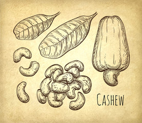 Cashew sketch set.