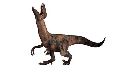 Raptor Velociraptor dinosours - isolated on white background