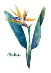 Watercolor strelitzia bouquet