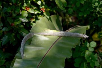close-up snake slough