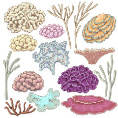 Colored Corals Set