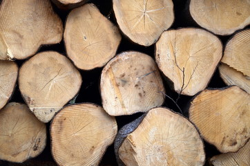 round timber background
