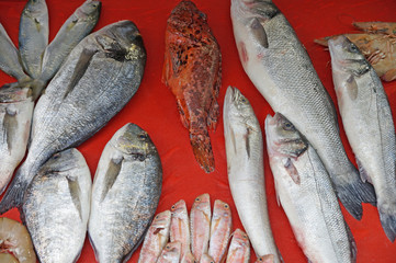 Sea fish is freshly caught and sold on food stalls