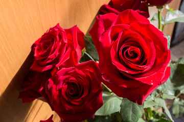 Red rose flowers on the light background