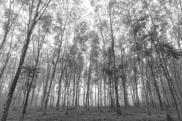 black and white of tropical forest