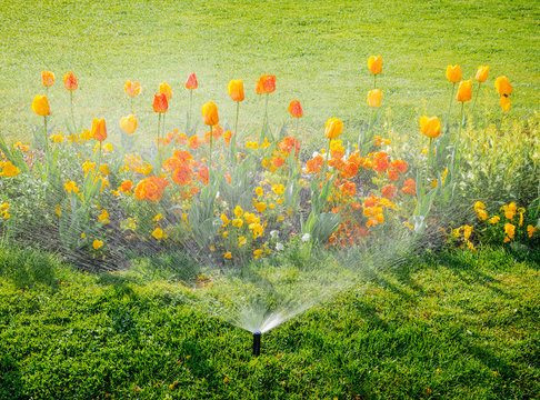 Smart garden activated with full automatic sprinkler irrigation system working early in the morning in green park - watering lawn and colourful flowers tulips narcissus and other types of spring flowe