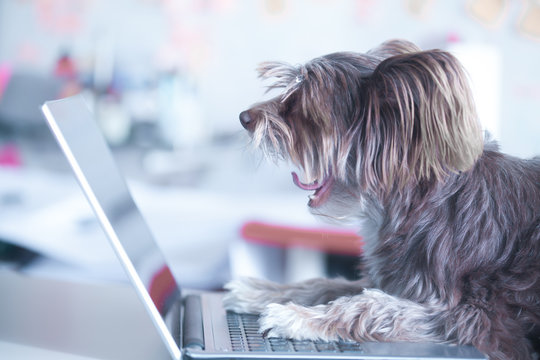 Funny dog works at the laptop. Pet using computer