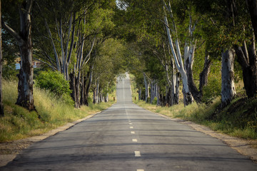 Country Road with tree lined. Alentejo Portugal