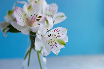 Close-up beautiful tender bouquet of Alstroemeria on blue background