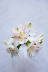 Beautiful tender bouquet of Alstroemeria on white marble background