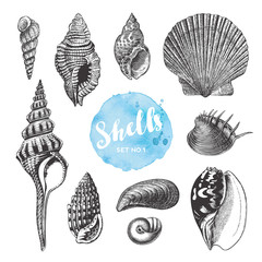 summer, beach and ocean vector design elements: collection of hand drawn sea shells - set 1