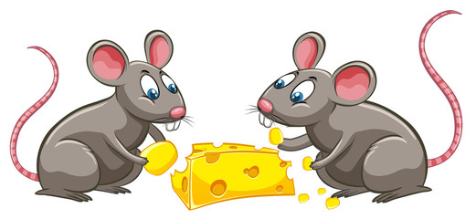 Two rats eating cheese