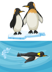 Penguin swimming and standing on ice