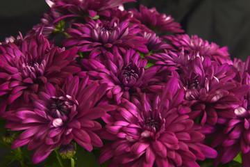 Macro photography of plants