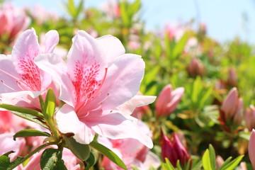 春 イメージ 花