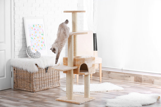 Cute kitty on cat tree at home