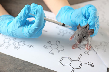 Hands of scientist giving injection to rat in laboratory