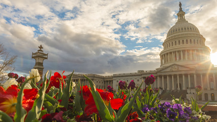Spring blooms at the United States Capitol Wall mural