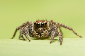 Close-up spider photography