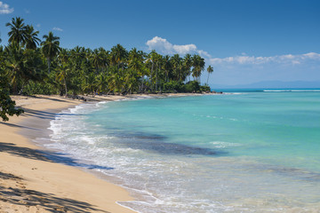 Beautiful tropical beach with palm trees on a sunny day
