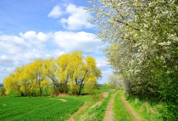Beautiful spring landscape in Czech Republic.
