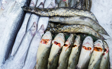 Many freshwater fishes in supermarket